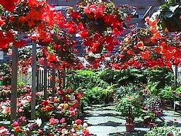 Begonia Gardens